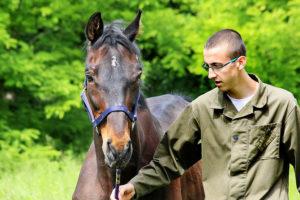 konji i zeljko