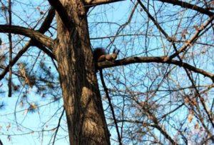 veverica-drvo-park-jagodina-fototanjugdusan-anicic-1487930147-1113329
